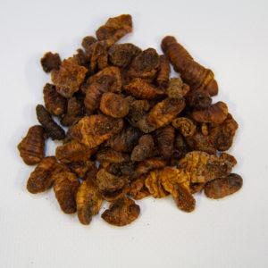 Chrysalide vers à soie